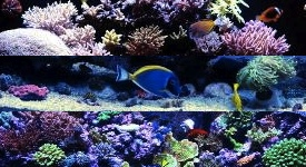 All Aquariums