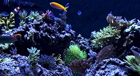 Featured Aquariums
