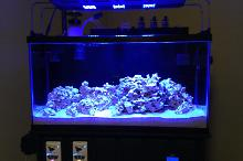38 Mixed-Reef Thumbnail