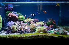 FTS March 21, 2015