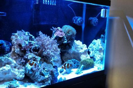 20g Office Reef Thumbnail