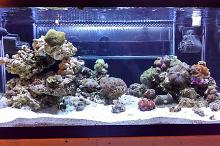 40b mixed reef Thumbnail