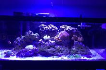 20g Long Nano Reef Thumbnail