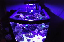 12 Gallon Nano Reef Thumbnail