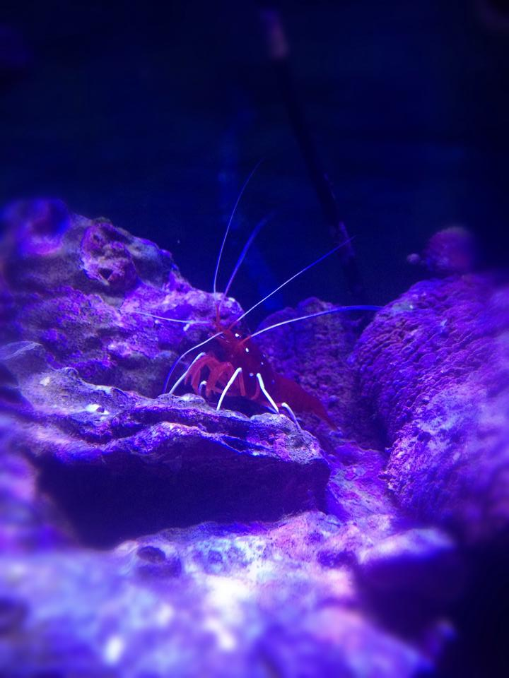 Blood Shrimp December 20, 2015