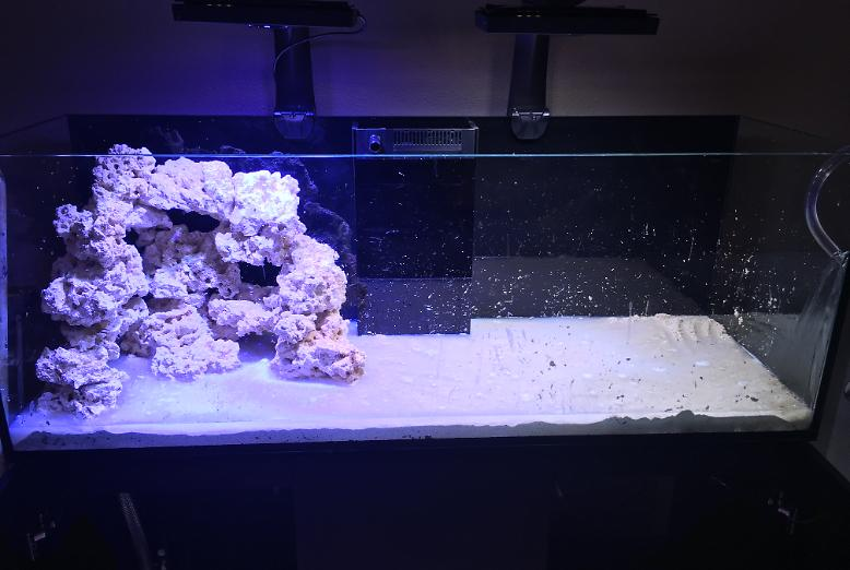Aquascape Start December 8, 2015