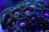 Eye of Rah Zoas