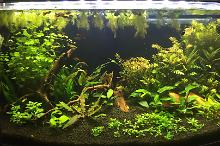 Ted's 46 USG Planted Tank Thumbnail