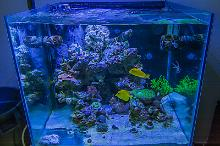 93 Gallon Cube Reef Thumbnail