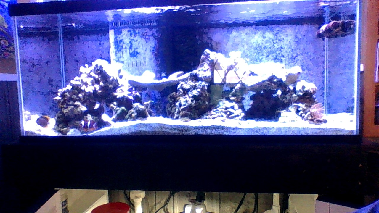 55 gallon reef Thumbnail