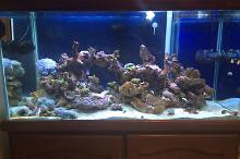 4ft mixed reef Thumbnail