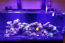 73 Gallon Red sea Thumbnail