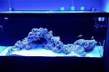 Church's 75G Great Basement Reef Thumbnail