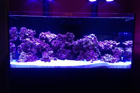 red sea reefer 425xl Thumbnail