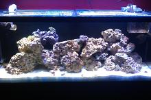 First Reef Tank Thumbnail