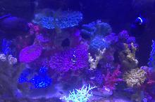 Lobby Reef Display Thumbnail