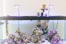 75 Gallon Saltwater Aquarium Thumbnail