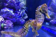 20g Reefer Sea Horse Tank Thumbnail