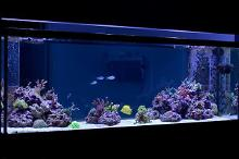 drummereef's 180g In-Wall Reef Thumbnail