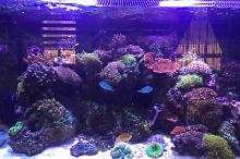 Big Pete's RSM250 Reef Tank Thumbnail