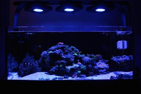 Duckhams 40 Gallon Reef Thumbnail