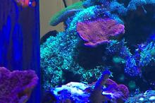 Red Sea Reefer 250 Thumbnail