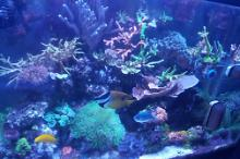My 1st Reef Aquarium Thumbnail