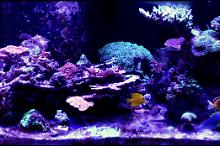 Conix67's 75G Mixed Reef Thumbnail