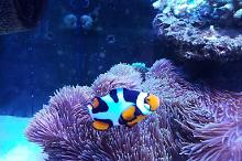 Mother of my clown fish