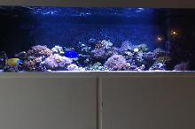 1400L Mixed reef Thumbnail