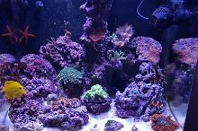 My Aquarium on December 4, 2016
