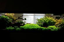 Display Tank Thumbnail