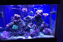 My Aquarium 110gallon reef Thumbnail
