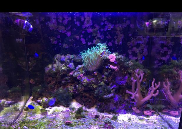 My Aquarium on Dec 29, 2016