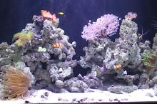 Chapter Three - The Reef Tank Thumbnail
