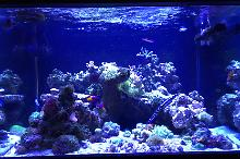 97 Gallon Reef Thumbnail