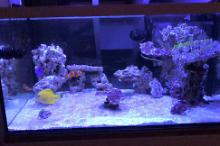 My Aquarium on January 5, 2017