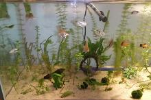 75 Gallon Community Aquarium Thumbnail