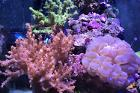 Saltwater Aquarium - Mixed Reef Tank on Jan 26, 2017