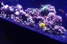 180 Reef on January 27, 2017
