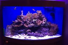 My  Saltwater Corner (summped) Thumbnail