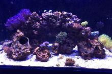 65 Gallon Red Sea Thumbnail