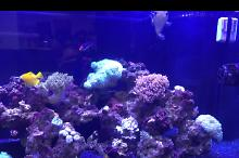 180 Reef on Feb 13, 2017