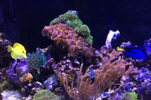 Active Reef on Feb 20, 2017