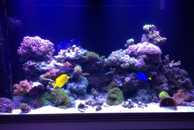 Mixed reef 90 gallons on Mar 4, 2017