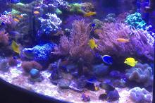 My Aquariumdeltec reef Thumbnail