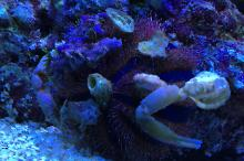 Active Reef on Mar 13, 2017