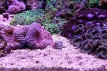 My Reef Aquarium Thumbnail