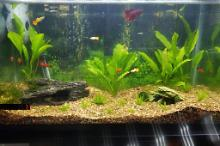 30 Gallon Community  Thumbnail