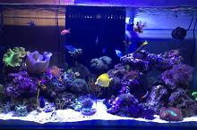 Dave's Reef Tank on Apr 3, 2017